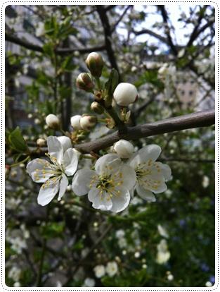 SWEDE Flower 2.jpg