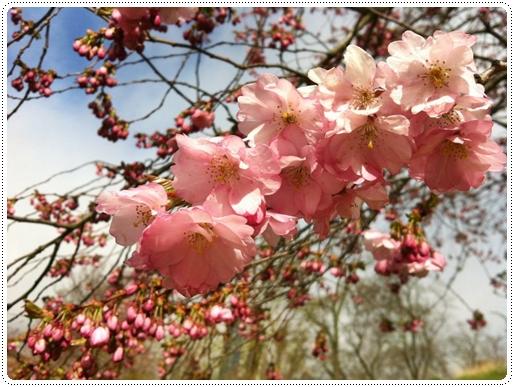 SWEDEN Flower.jpg